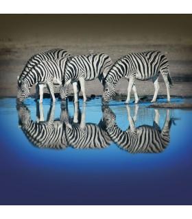 Men's Zebra recycled polyester Boxer